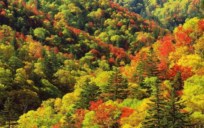 autumn wallpaper nature hd