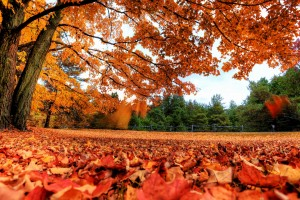 autumn wallpaper red