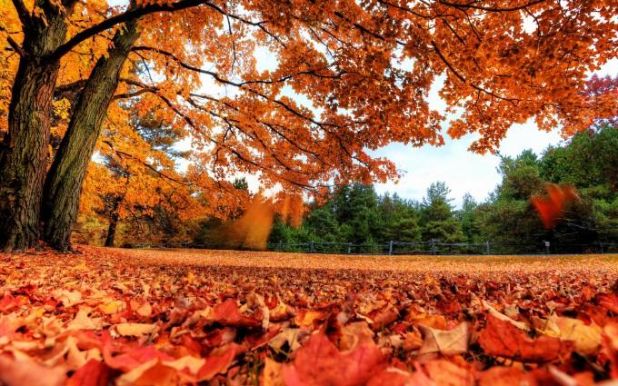 autumn wallpaper red