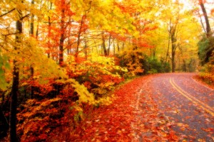 autumn wallpaper road