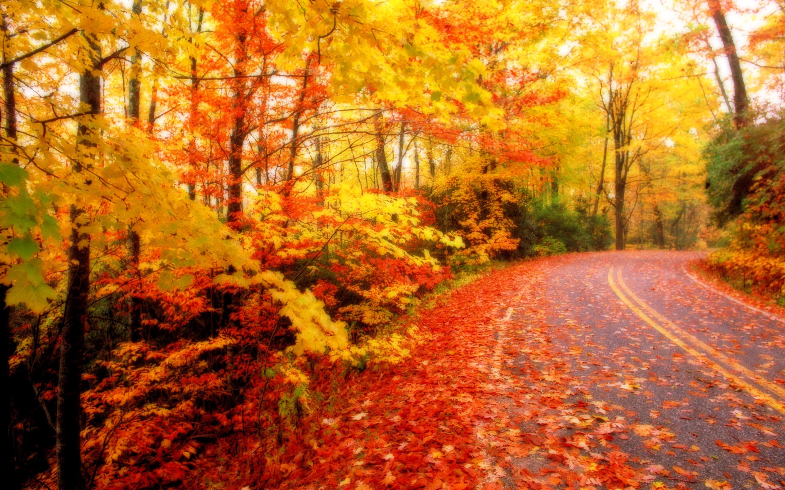 autumn wallpaper road aa