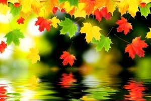 autumn wallpaper water