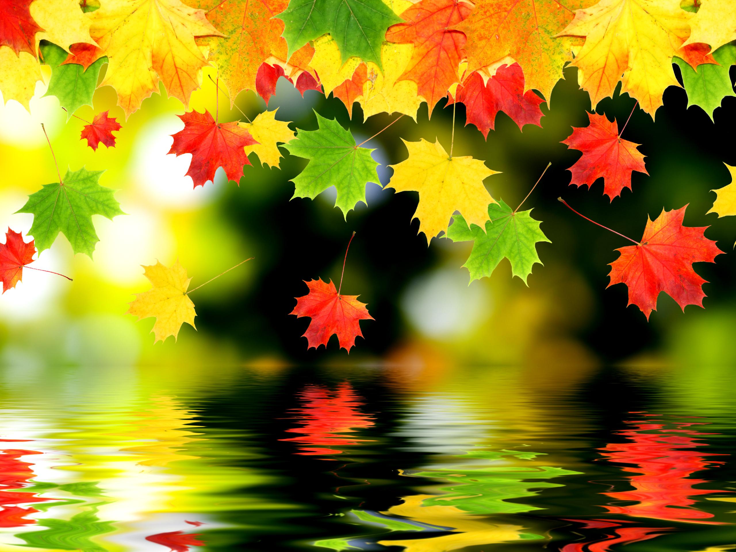 autumn wallpaper water