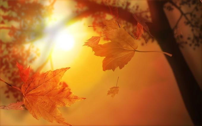 autumn wallpaper yellow hd