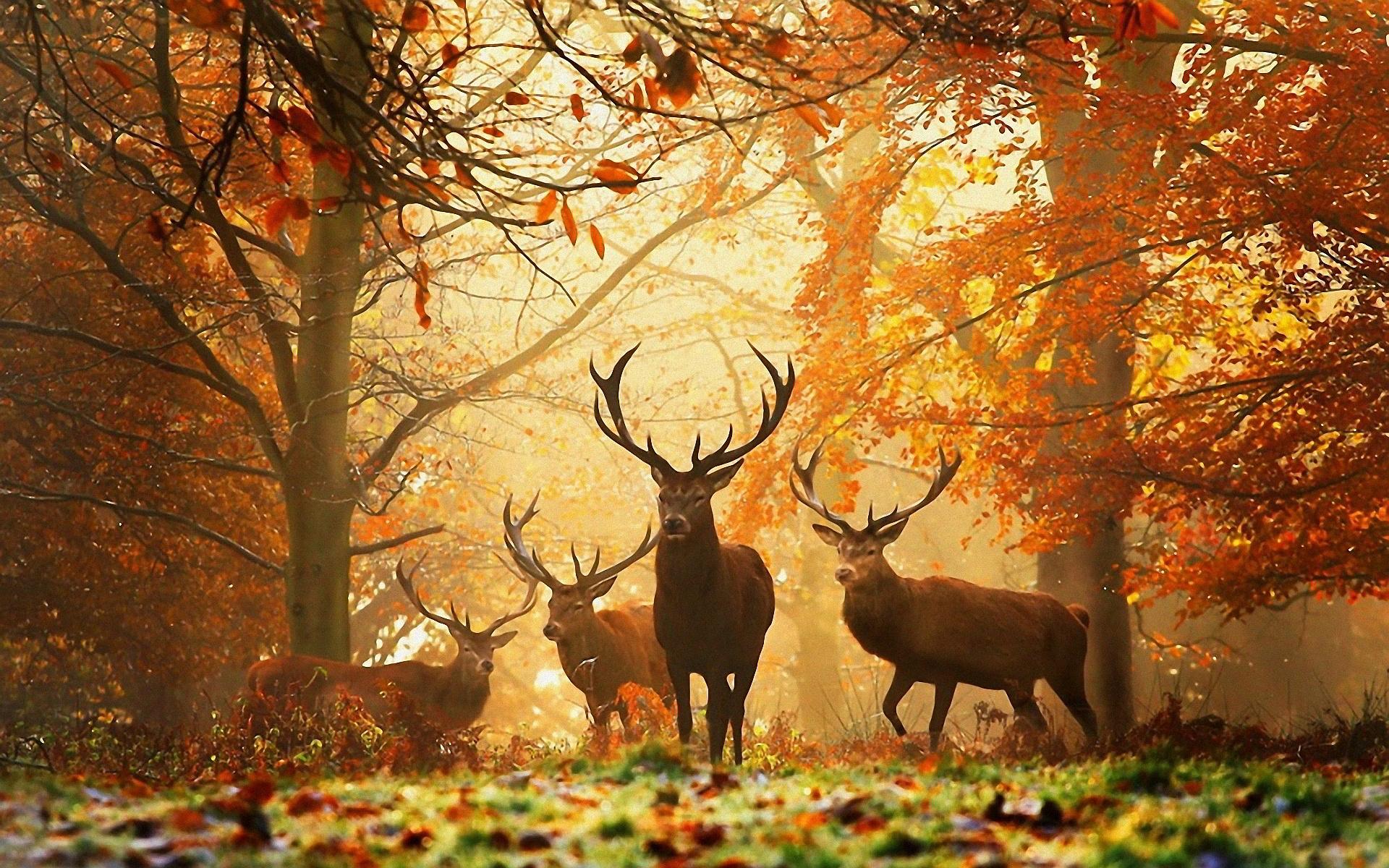 Autumn Wallpaper Hd Desktop Wallpapers 4k Hd