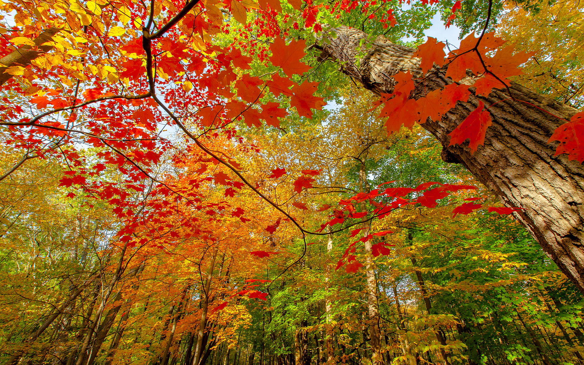 autumn wallpapers free download