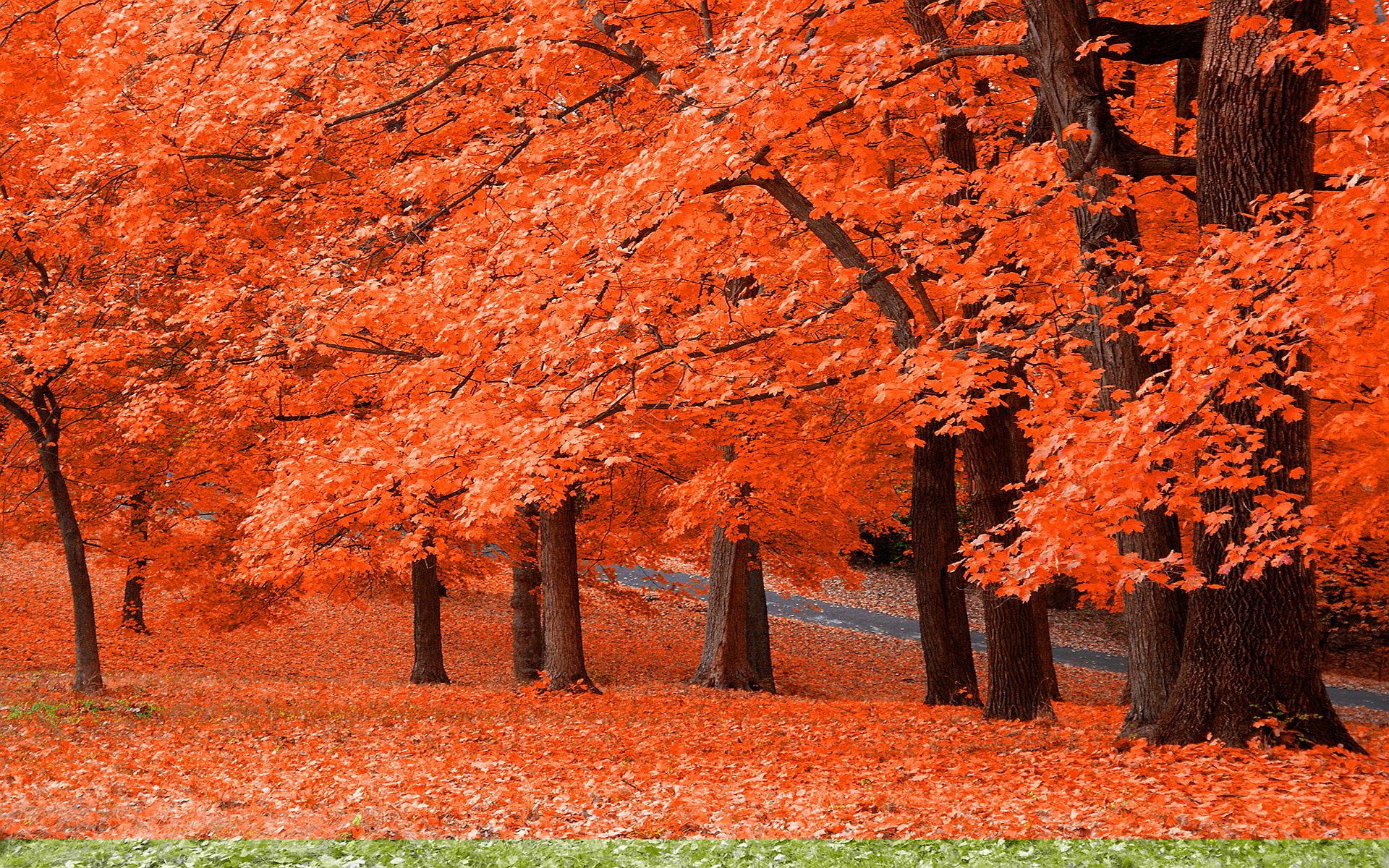 autumn widescreen wallpaper