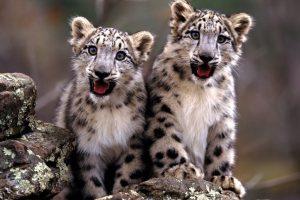 baby animal download free