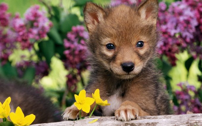 baby animal picture