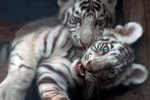 baby animal pictures hd