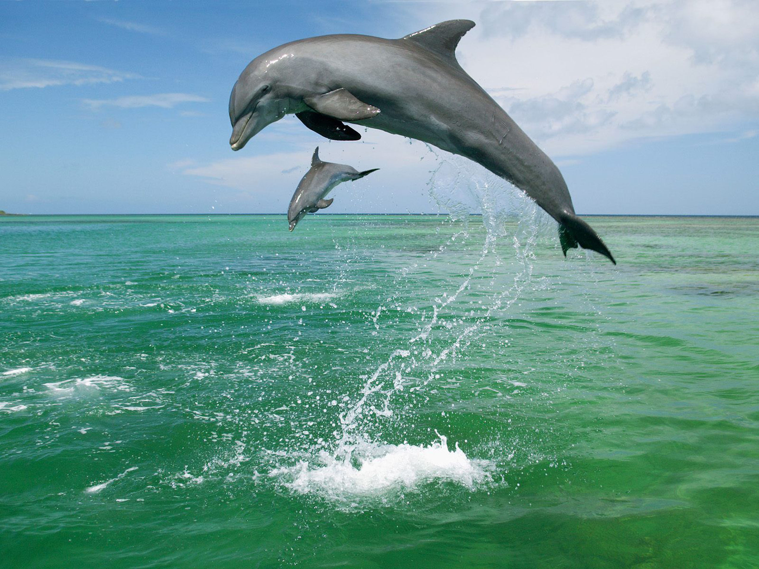 baby dolphin wallpaper