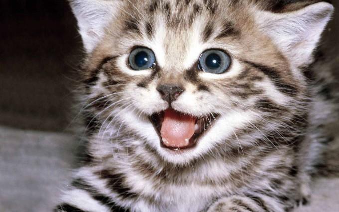 baby kittens wallpaper