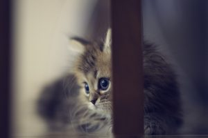 baby kittens wallpaper