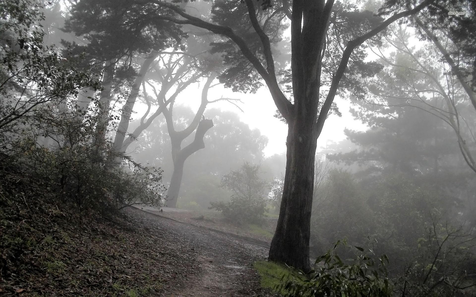 background fog nature