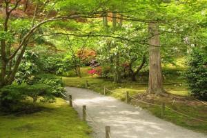 background garden images