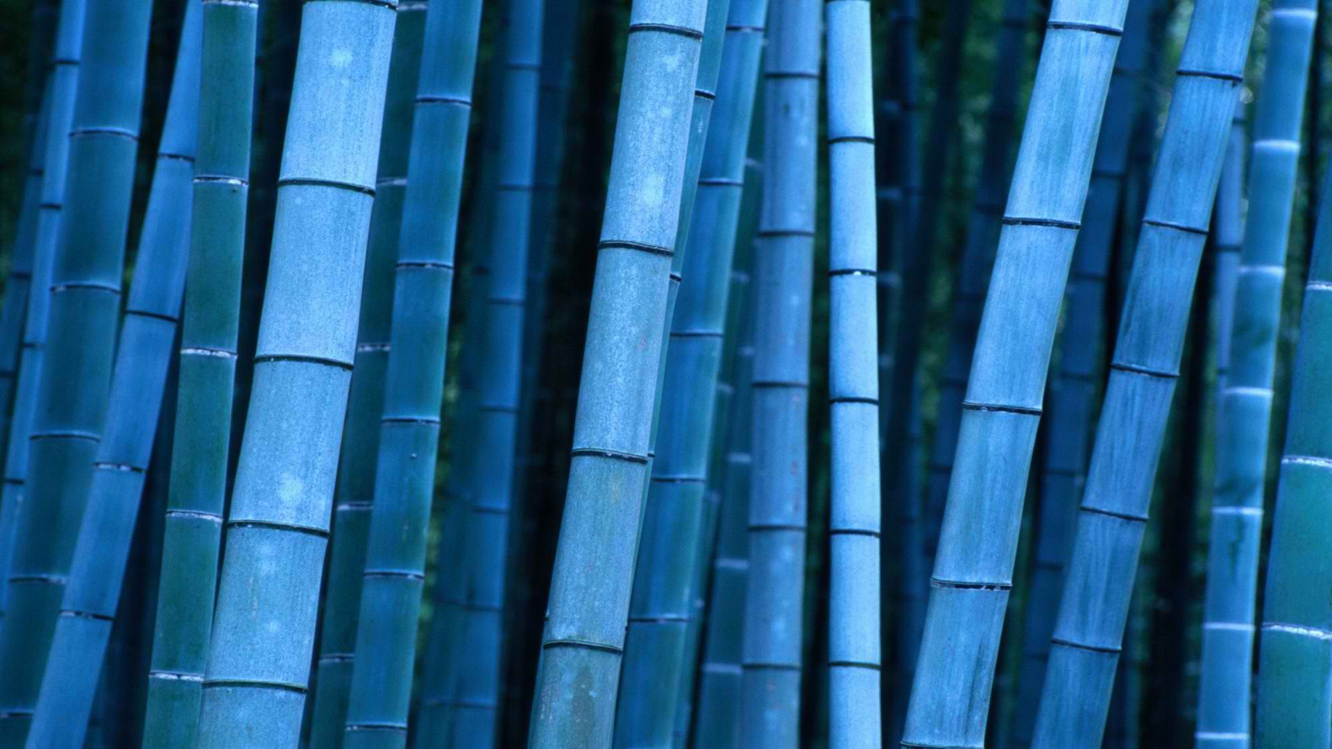 bamboo wallpaper A10