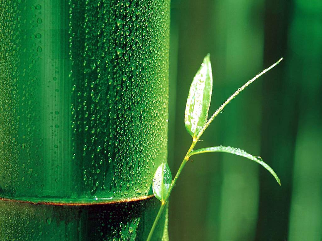 Full HD p Bamboo Wallpapers HD Desktop Backgrounds