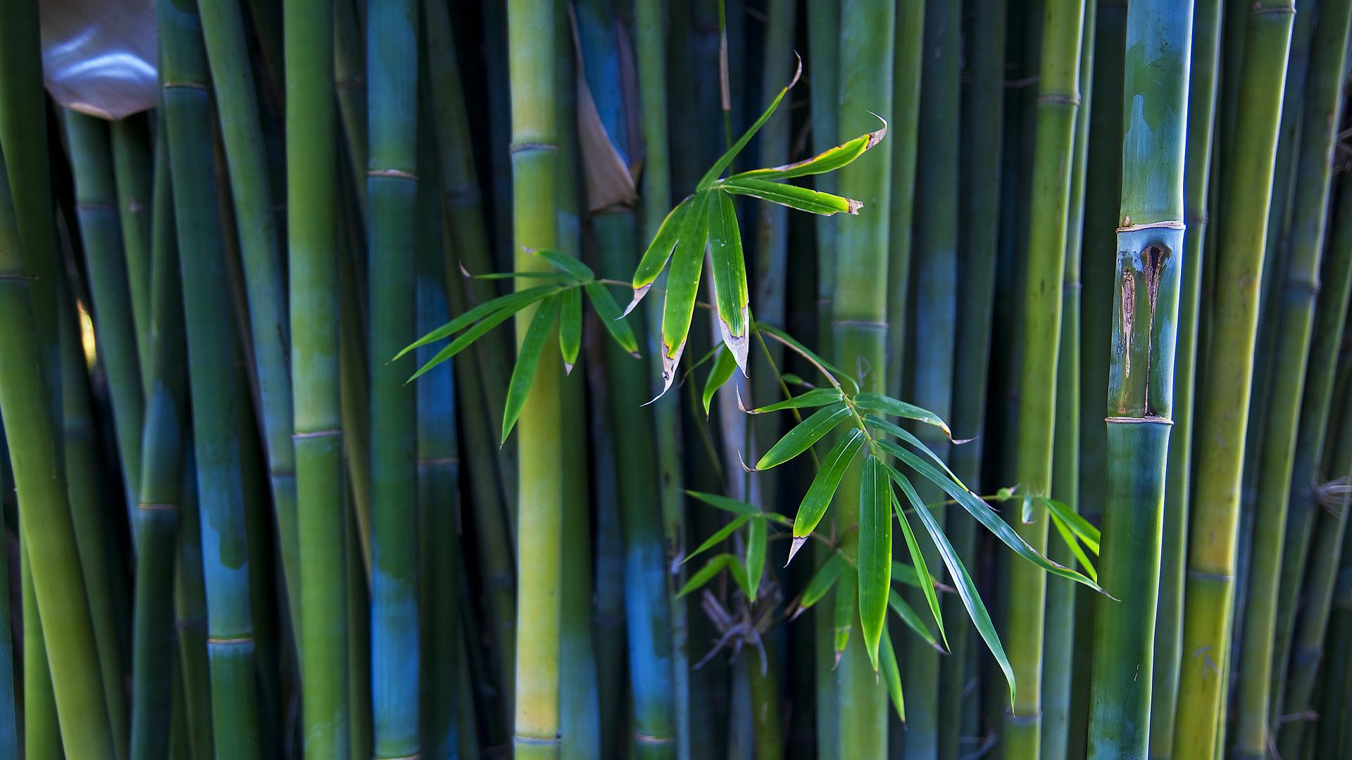 bamboo wallpaper A3