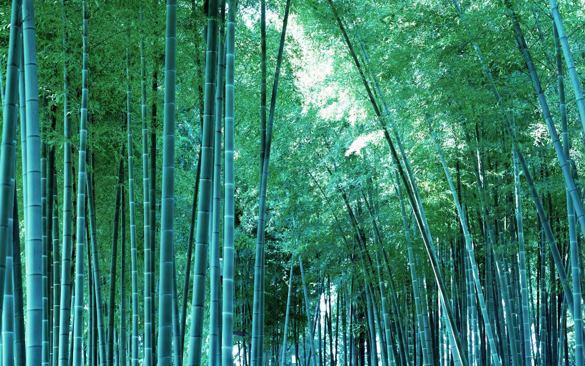 bamboo wallpaper A5