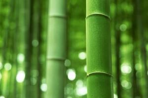 bamboo wallpaper A8