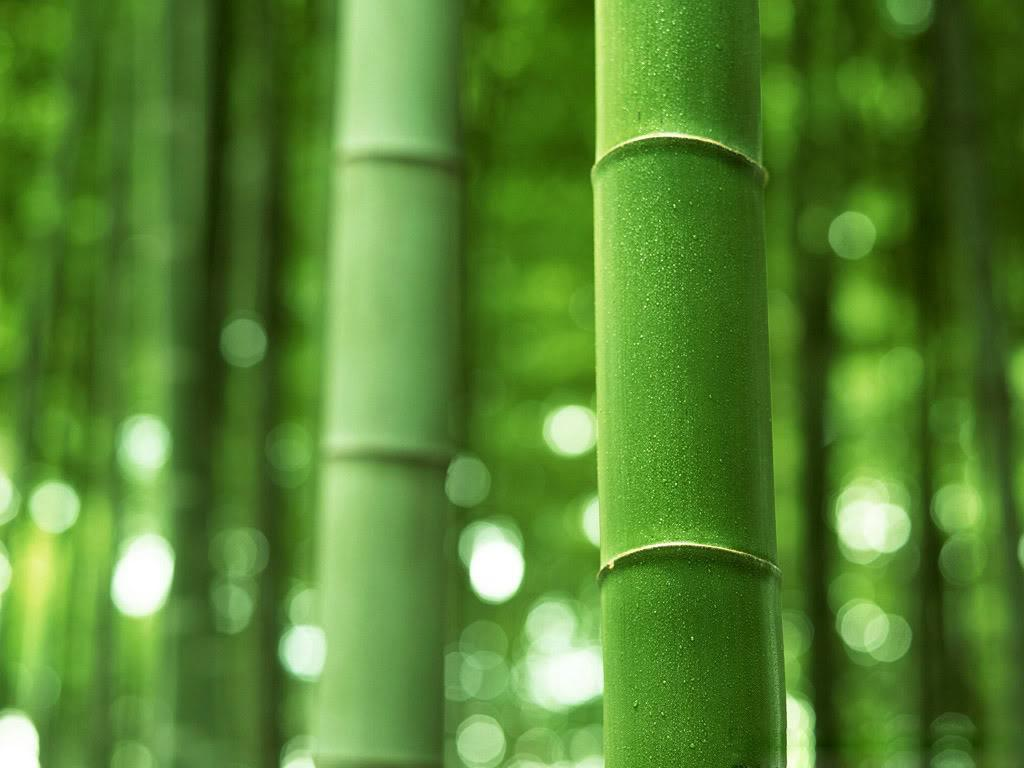 bamboo wallpaper A8