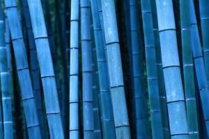 bamboo wallpaper forest