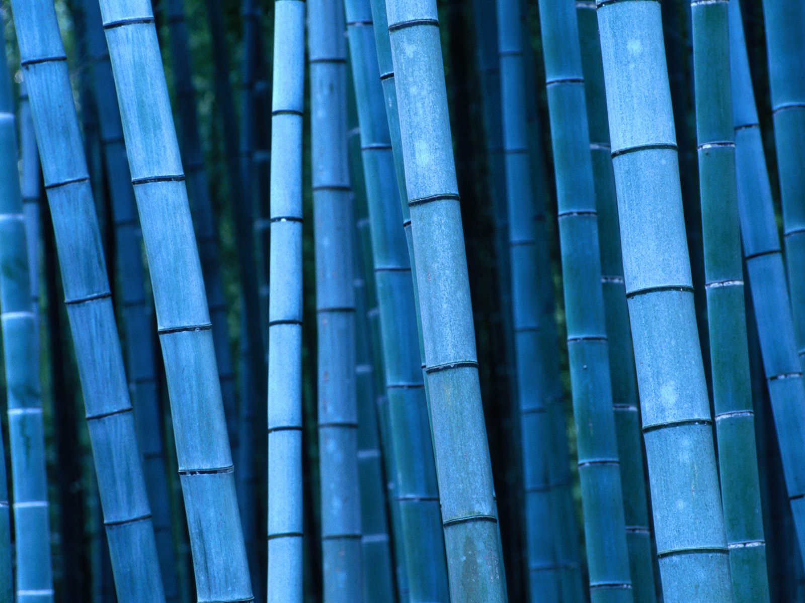 bamboo wallpaper forest