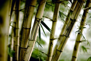 bamboo wallpaper free