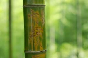 bamboo wallpaper nature