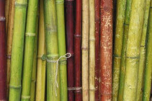 bamboo wallpaper trees
