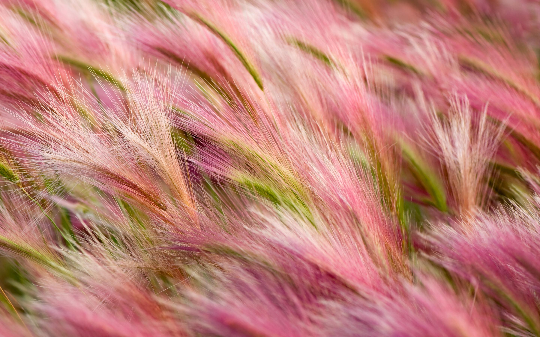 barley wallpaper desktop