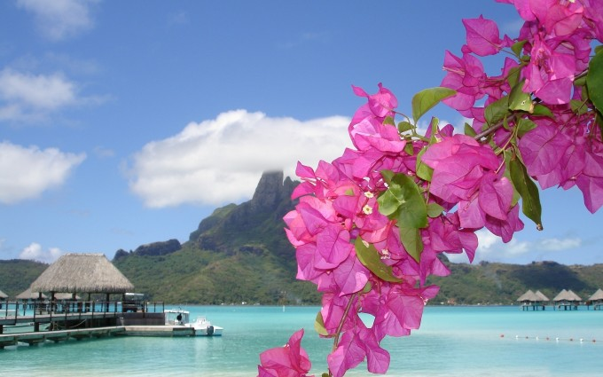 beach purple flower