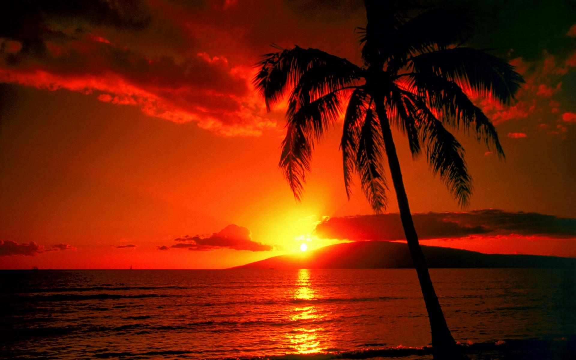 beach sunset wallpaper evening