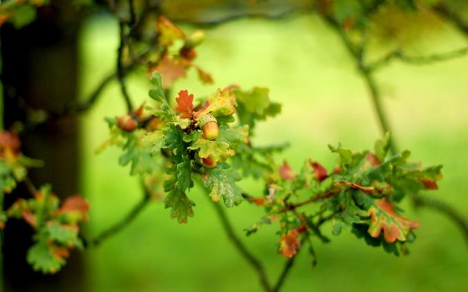beautifuk oak tree wallpaper