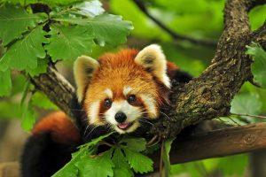 beautiful animal image