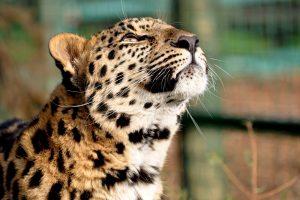beautiful animal picture hd