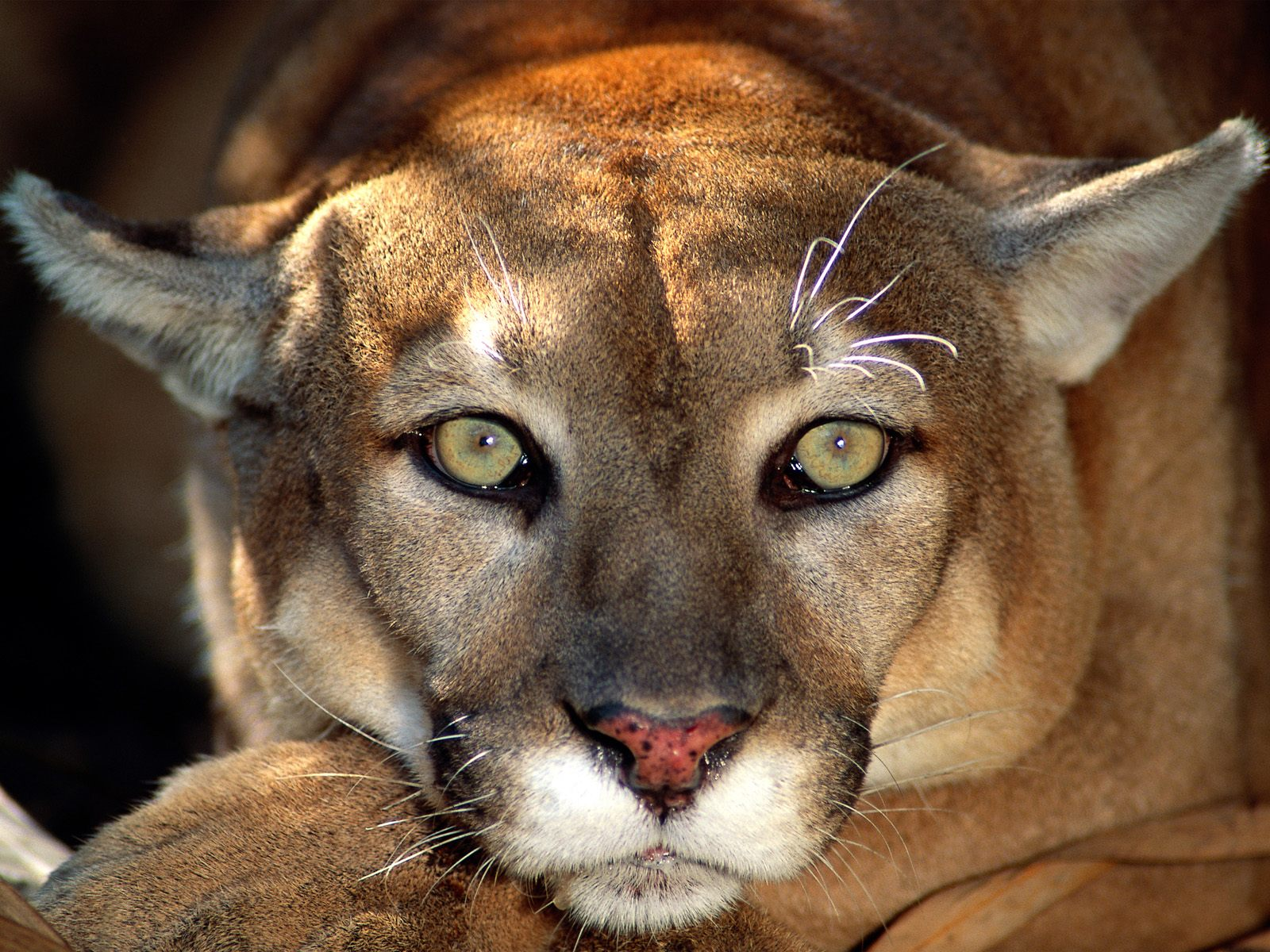 beautiful animal pictures A1