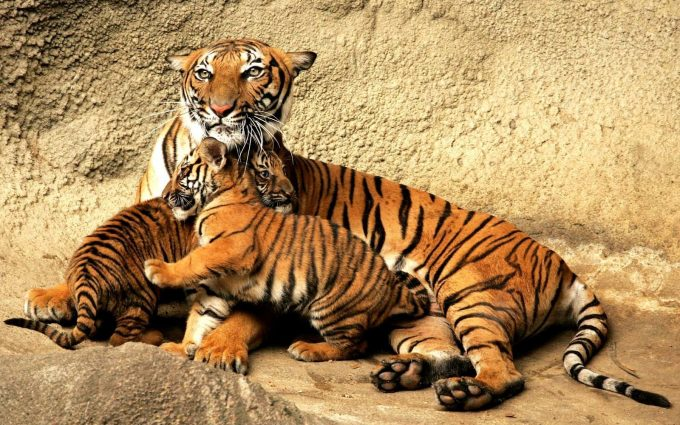beautiful animal pictures hd