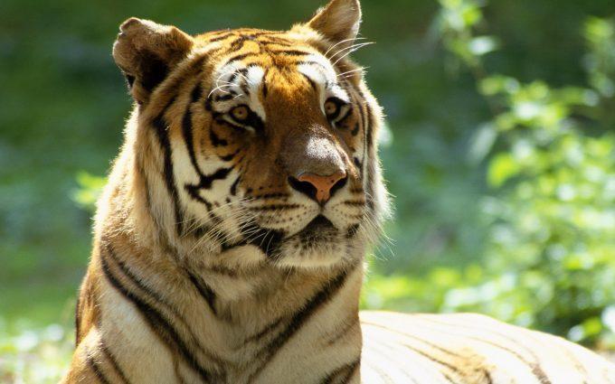Animals_Views_www.laba.ws
