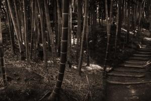 beautiful bamboo wallpaper