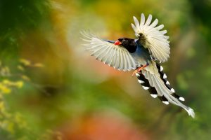 beautiful bird wings