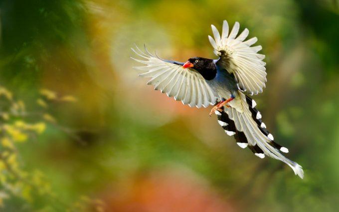 beautiful bird wings