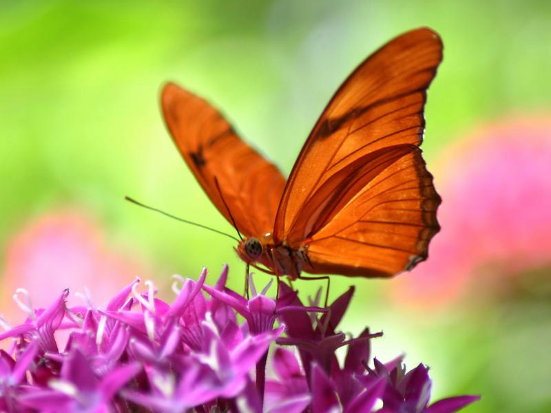 beautiful butterfly wallpapers desktop
