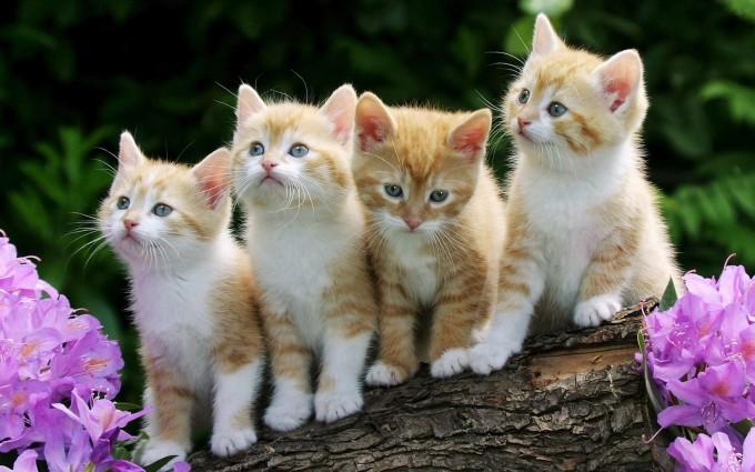 beautiful cat and kitten wallpaper