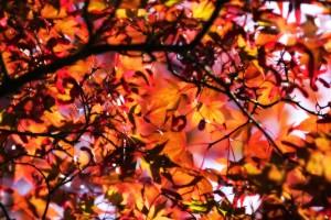 beautiful fall wallpapers
