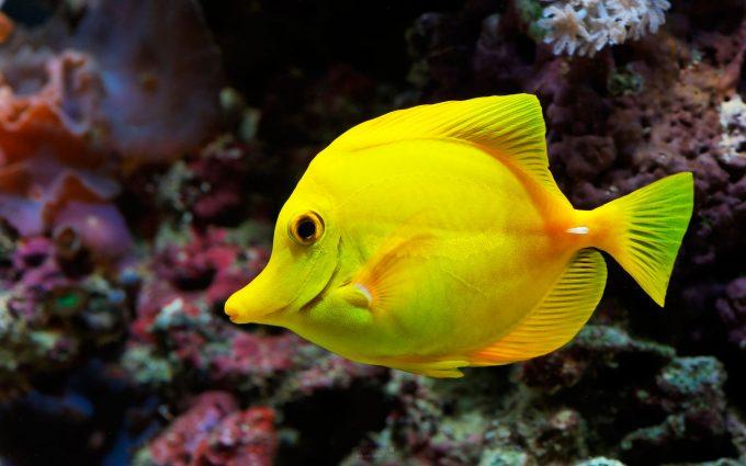 beautiful fish wallpaper