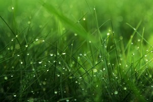 beautiful grass pictures