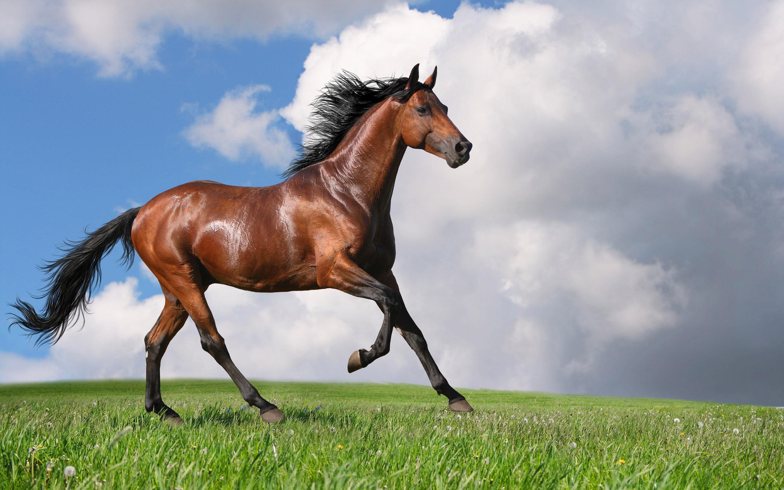 Картинки обои лошадь на рабочий стол