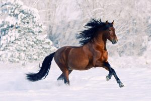 beautiful horses wallpaper