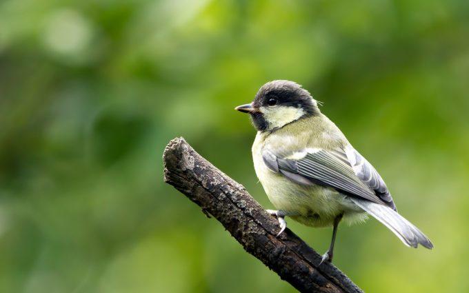 beautiful images birds